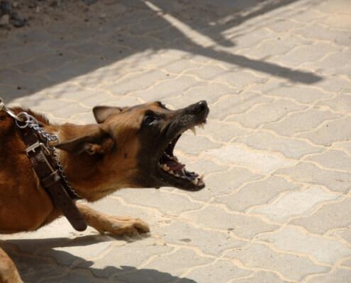 Insurance for Dog Bite Claims Spokane, WA
